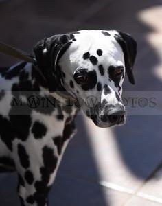 3-4-18 Dog 33