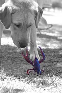 Crawfish and Sadie
