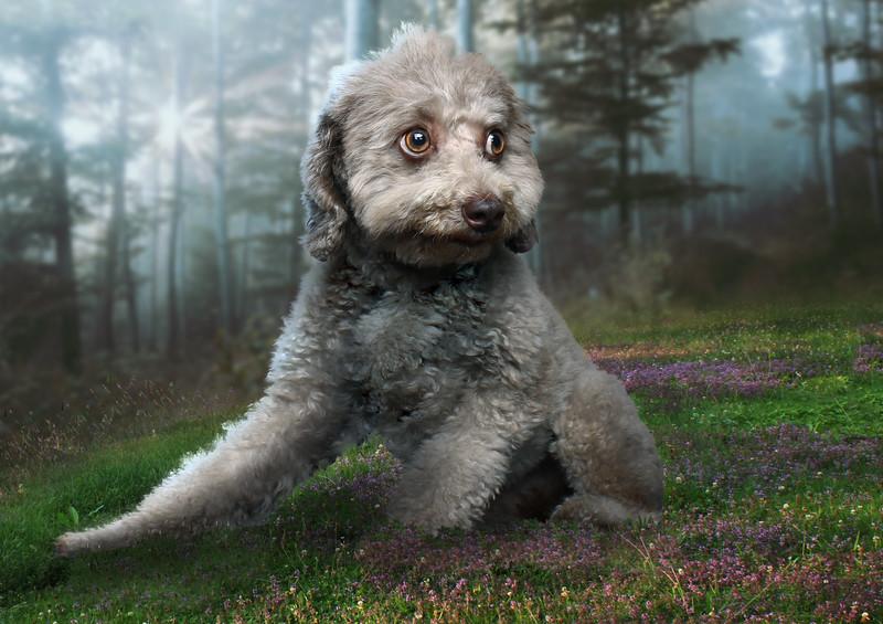 dog-ff1.jpg