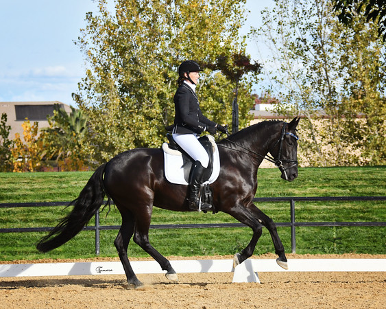 Starr Vaughn Fall Dressage