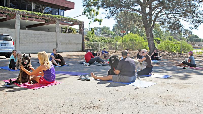 10-16-16: DMF Downward Dog Yoga