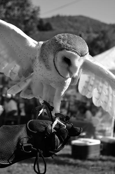 BARN OWL 10-26-2014.psd
