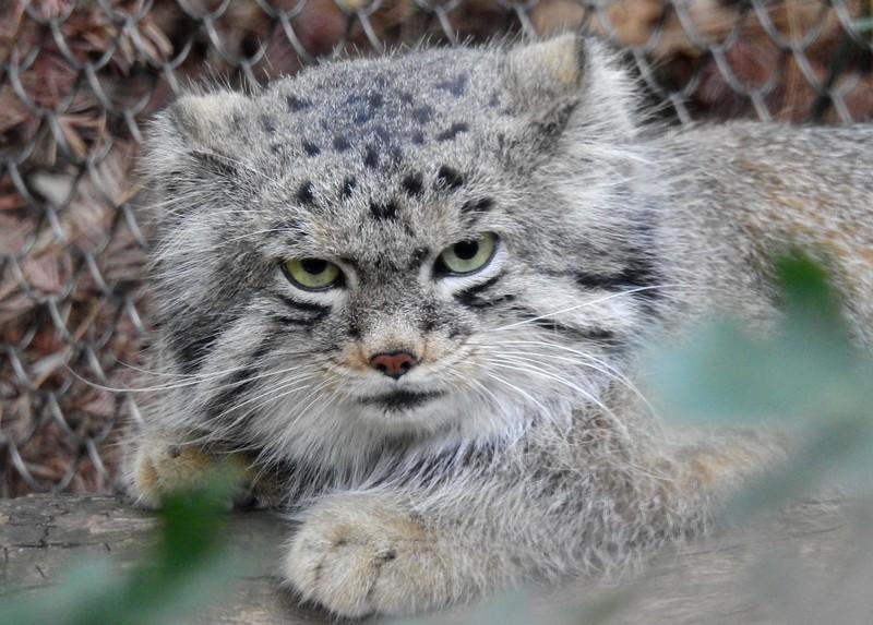 Cheyenne Mtn Zoo 2019 (1184).JPG