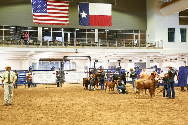 Cow Calf Ring Shots