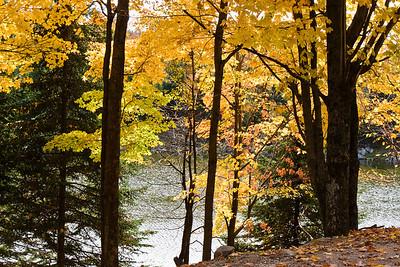 Parc Omega Fall 2008