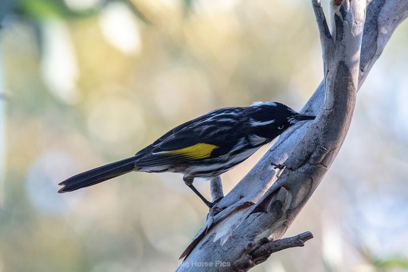 Bird april 2019 b.jpg