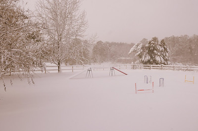 Snow Dogs 2009