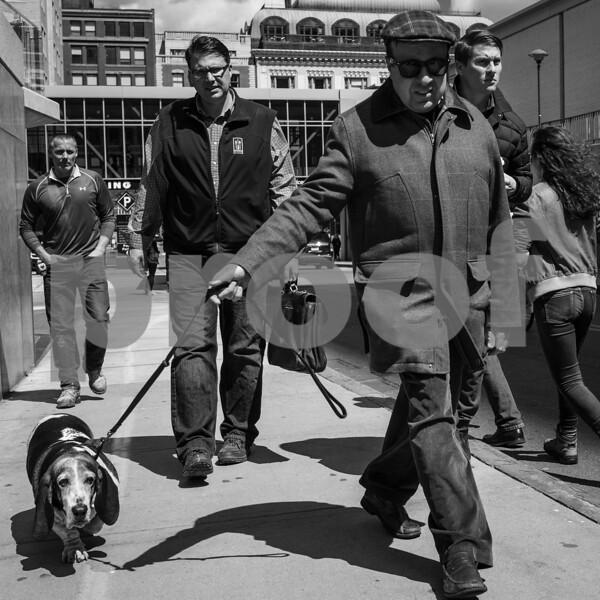 Basset hound boulevardier-2.jpg