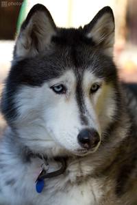 0003-Sierra Dog
