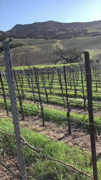 20210224 Peake Ranch Vineyard video