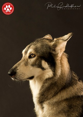 The Northern Inuit