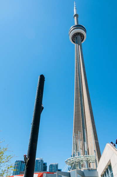 CN Tower, and giant woodpeckers