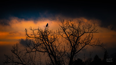 201213 Sunset and Eagles on Mystic Lakes