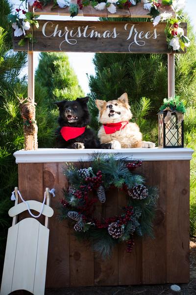 KAP Christmas Minis - KS-8.jpg