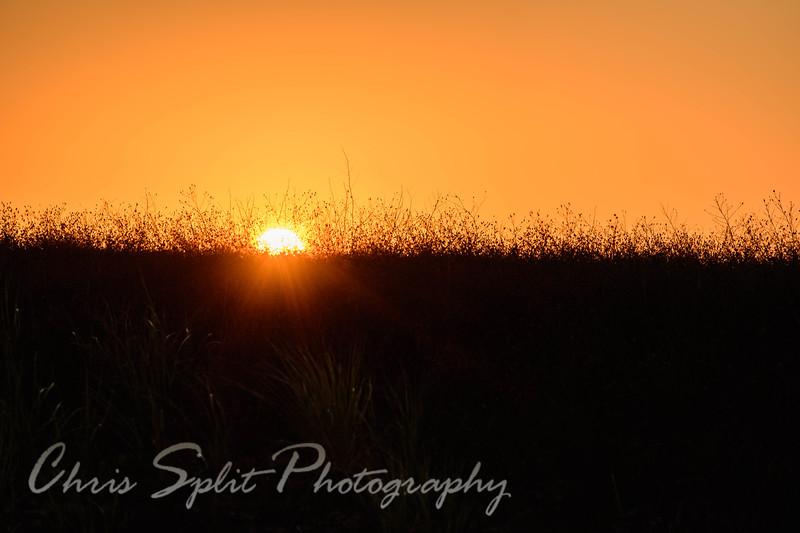 sunrise grass (1 of 1).jpg