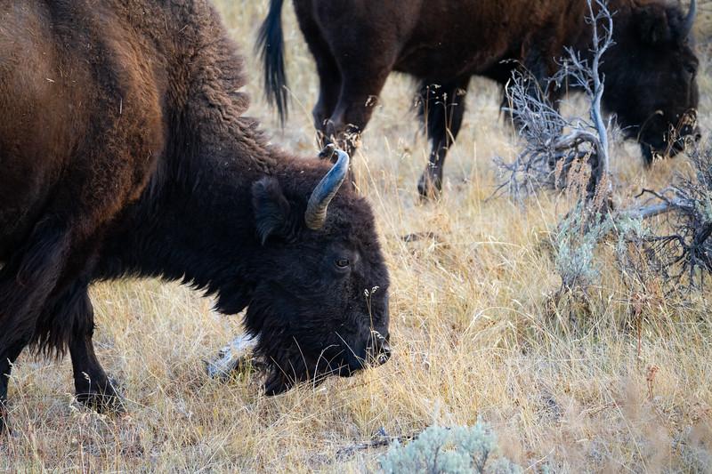 Yellowstone-84.jpg