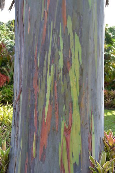 Oahu Hawaii 2011 - 83.jpg