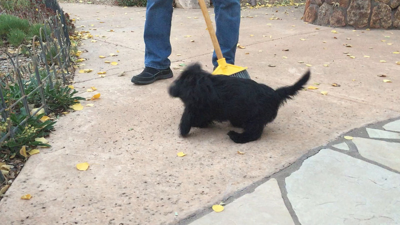 Attacking the broom.