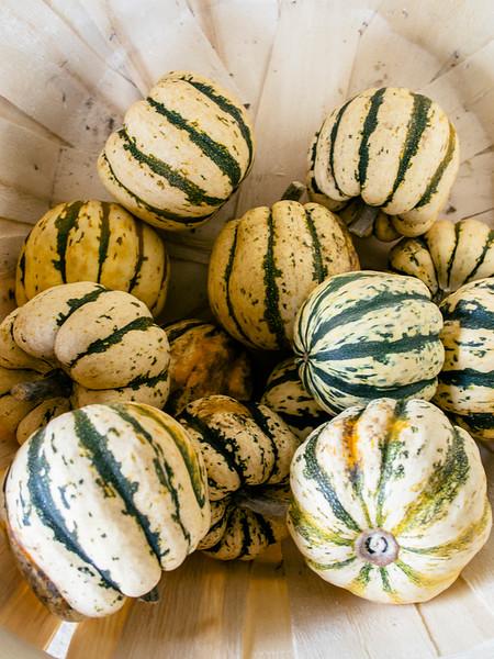 mccully's Hill farm squash 3.jpg