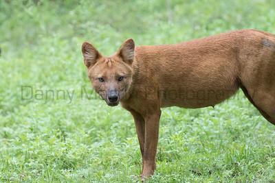 India - Mammals
