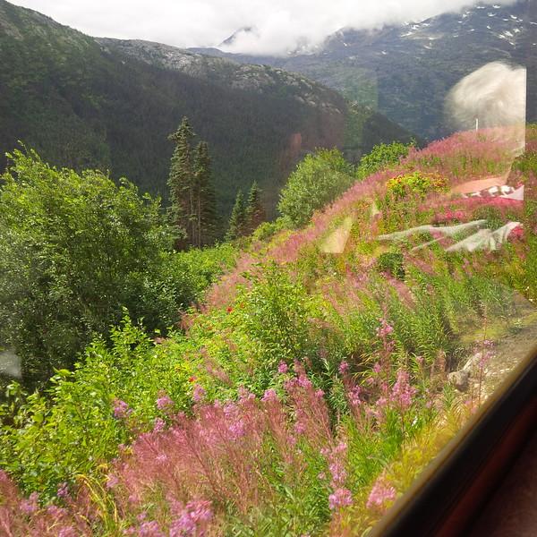 Alaska 29.jpg