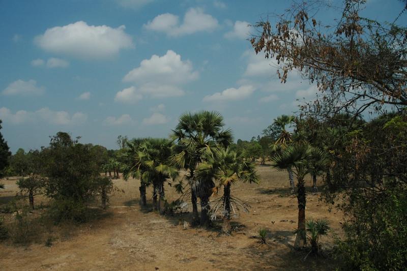 Dry Season - Angkor, Cambodia
