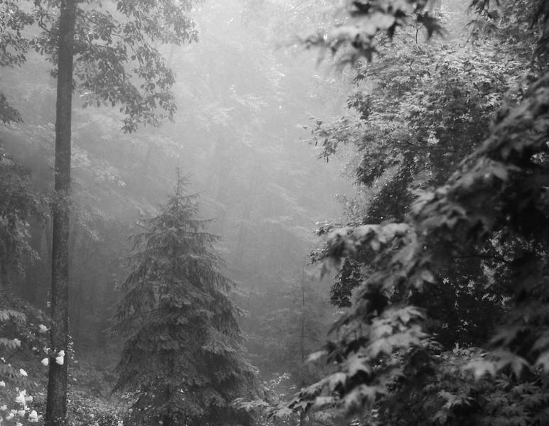 Rainy Day Coburn Road