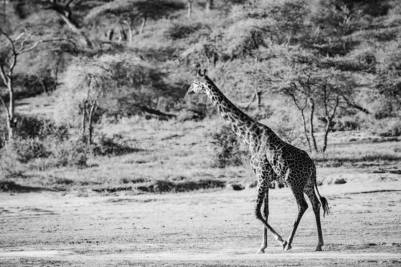 Tanzania_Feb_2018-72.jpg