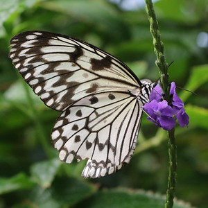 Victoria Butterfly Garden - 26 September 2017