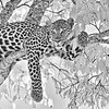 Leopard resting on a tree