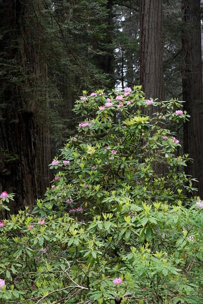 redwoodsFin29-1176.jpg