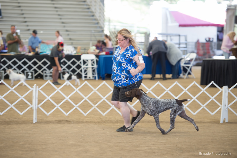 2019 Malibu Kennel Club-0005.jpg