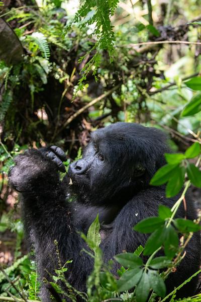 Uganda_T_Gor-133.jpg