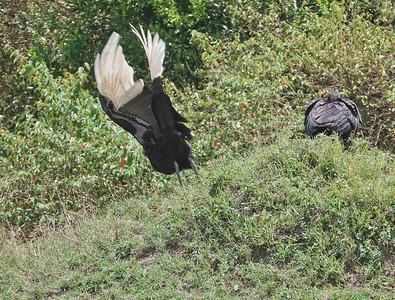 Birds of Masai Mara