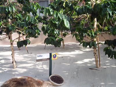 Epcot Oct 2007