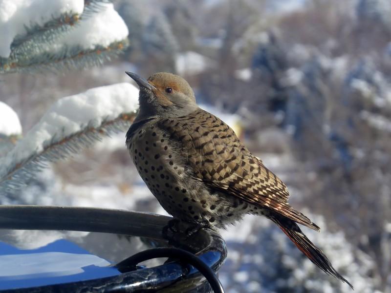 birds (101).JPG