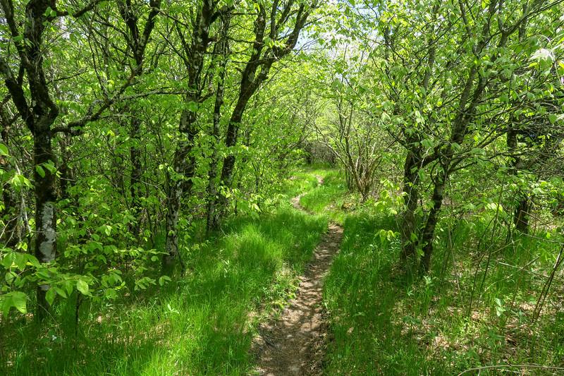 Mountains-to-Sea/Art Loeb Trail -- 5,930'