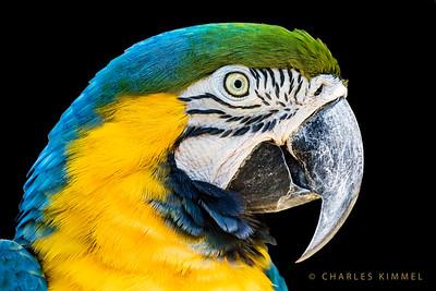 Macaws: 2019