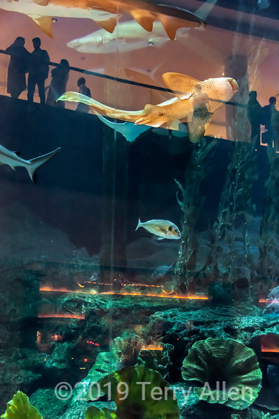 Spectators, fish and reflections