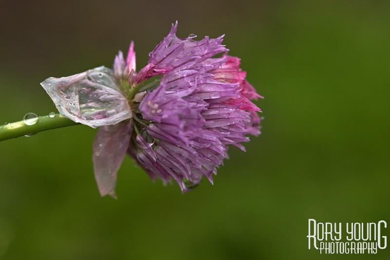 5D-Flower-E.jpg