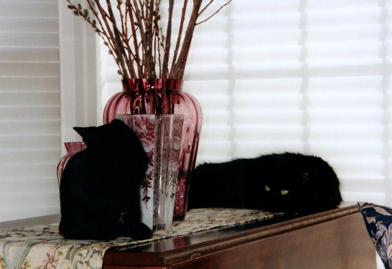 2000_April_Cats_0003_a.jpg