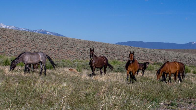 Wild Mustangs 2019-52.jpg