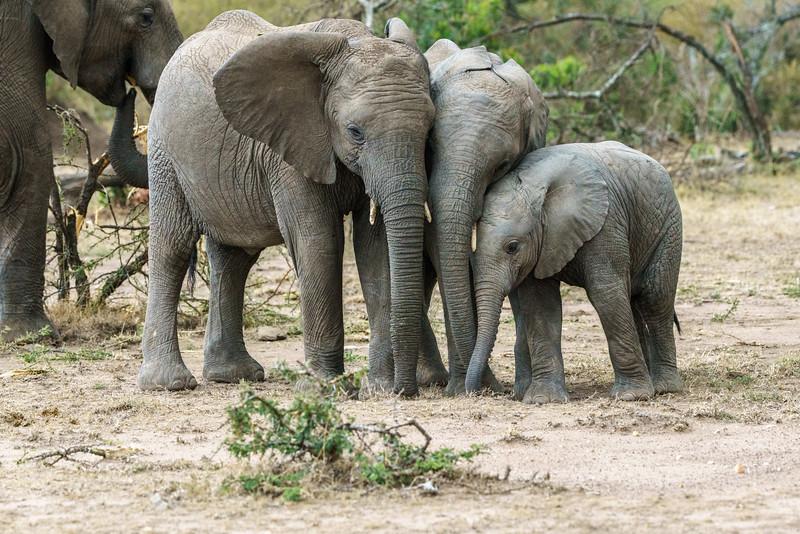 Kenya 2015-09278.jpg