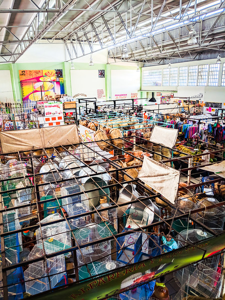 Colima Constitucion market_.jpg