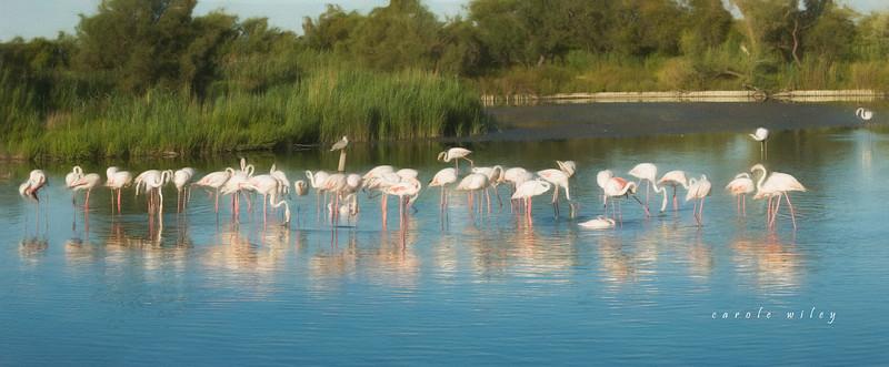 flamingo 8 frame pano.jpg