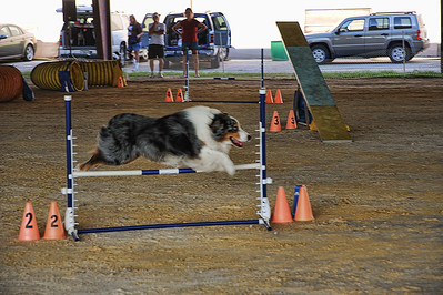 Friends of Abused Children Agility and Halloween