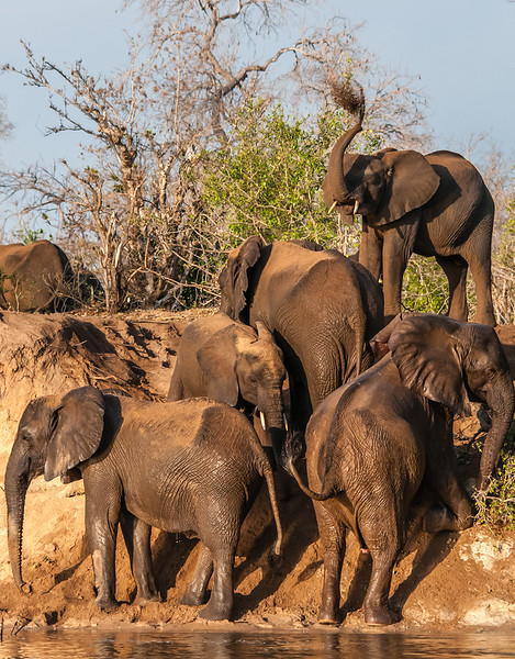 Ian Peters_Elephants crossing river.jpg.jpg