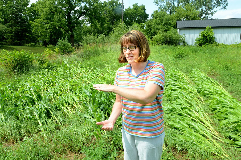 . Tami Mapiatt near her corn field that was leveled during storms on Tuesday. The storms not down a power line near her home on Seymour Lake Road east of Sashabaw in Brandon Township.    Tuesday, July 23, 2013.  The Oakland Press/TIM THOMPSON