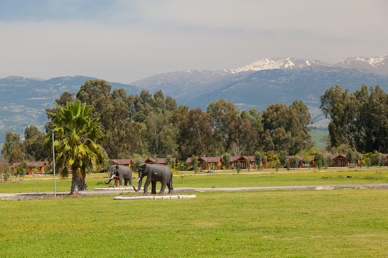 Snowy peak of Mount Hermon in the early spring in Israel with elefants on green grass.