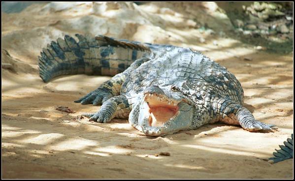 Ferme aux crocodile (Pierrelatte - France)